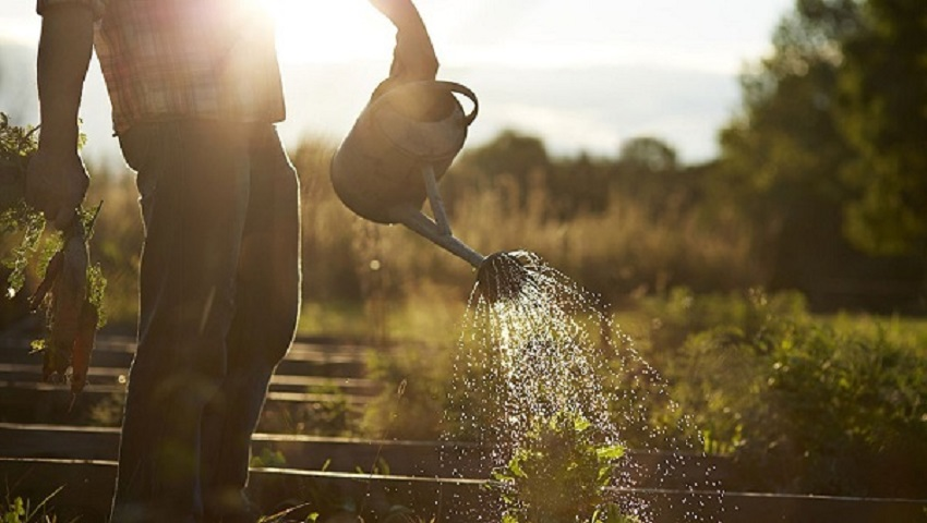 When is the best time to water your plants?