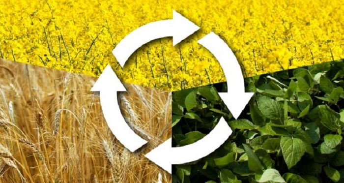 What is crop rotation: types and benefits