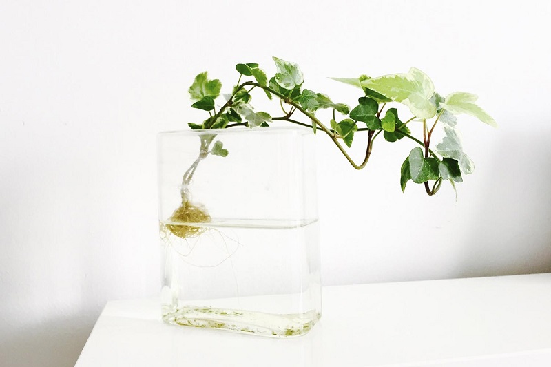 How to grow plants in water