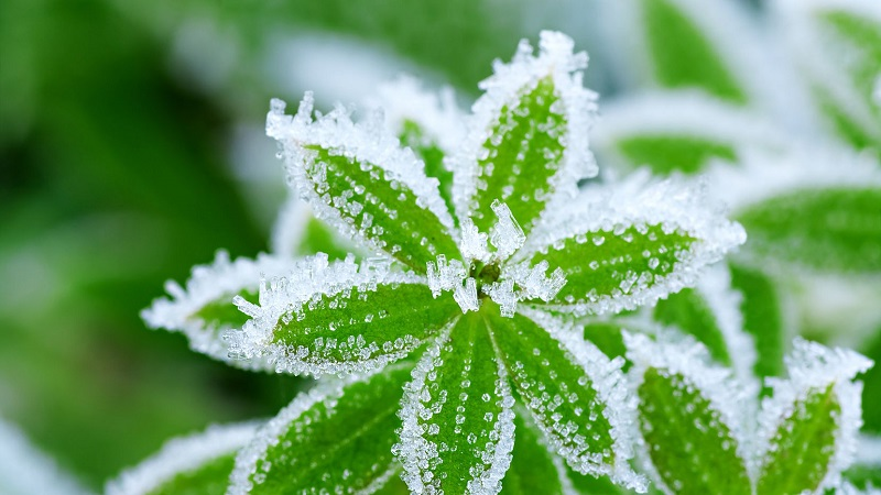 How to protect plants from the cold