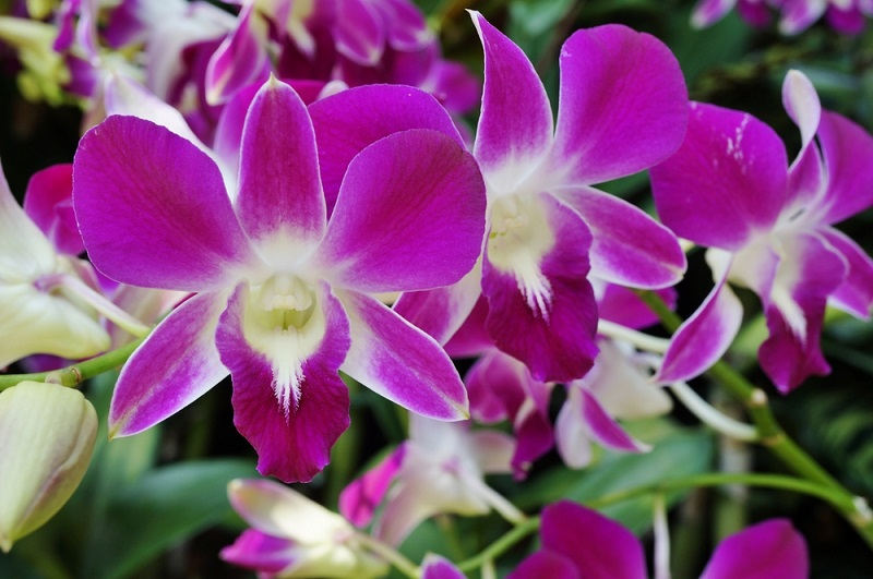 How to orchids grow