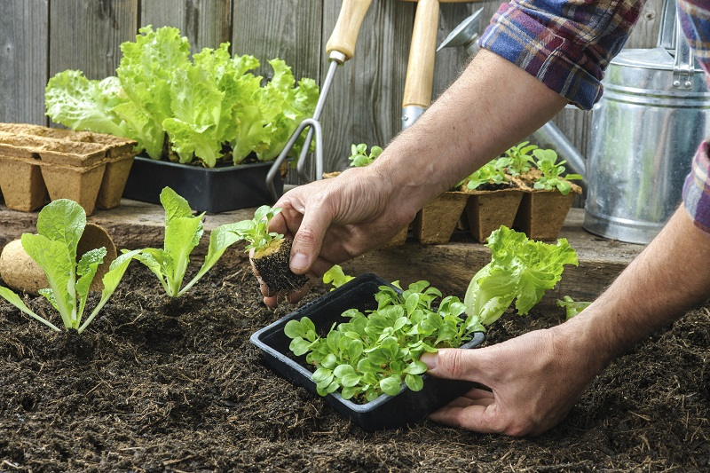 8 HOME GARDENING TRICKS THAT WILL KEEP YOUR PLANTS GORGEOUS