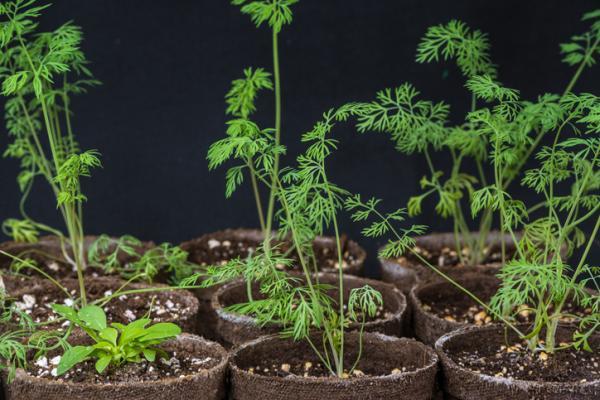 fragrant indoor plants