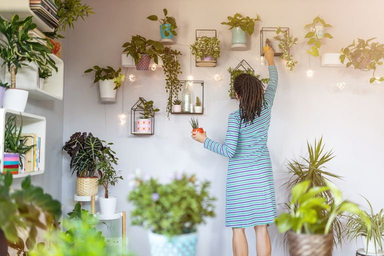 Fragrant indoor plants to put inside your house