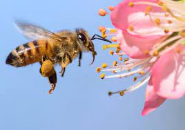 Tips For How to Make Your Garden Bee Friendly